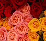 rosespck